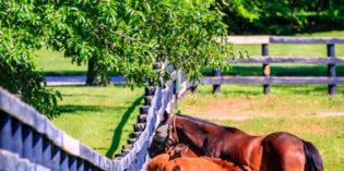 2020 American Racehorse Stallion Register Information
