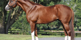 First Annual Indiana Thoroughbred Alliance Stallion Service Auction