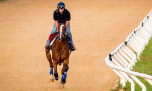 Indiana-Bred Racehorses Help Fuel Other Champions at KER