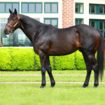 Grade 1 Winner Mr Speaker to Stand in Texas at Forks of the Paluxy Farm