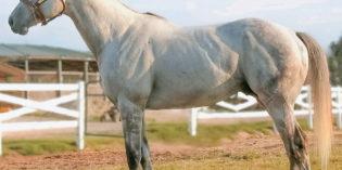 Arkansas Stallion Street Strategy Gets First Winner at Remington Park