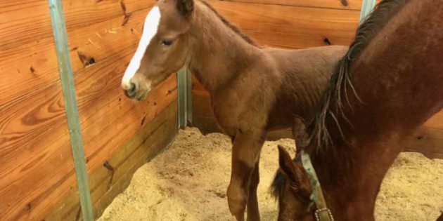First Foal by Texas Bling Born Sunday