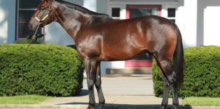 Aikenite, Leadem in Ken to stand in Texas for 2020 breeding season