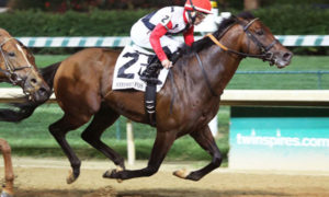 Grade 1 Winner Bradester to Stand in Texas at Valor Farm