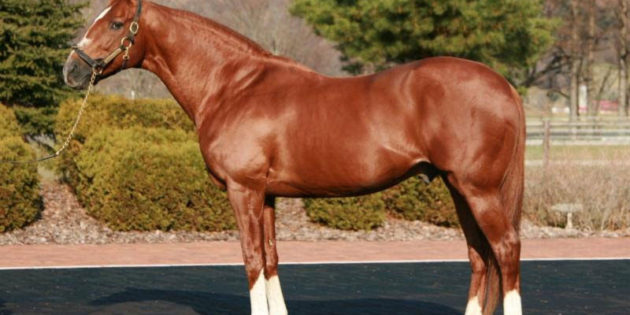 Horse of the Year and Kentucky Derby Winner Charismatic Passes Away