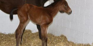 First Foal by Code West Arrives at WestWin Farms in Oklahoma