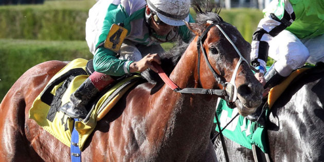 Multiple Graded Stakes Winner Csaba to Stand at R Star Stallions in Indiana