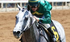 Texas-bred Direct Dial, by Too Much Bling, Favored in G3 Sanford at Saratoga