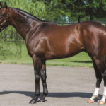 Grade 2 Winner Dramedy to Stand at River Oaks Farms in Oklahoma