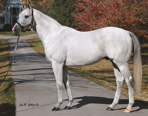 Millionaire Stallion Fort Prado Relocating To Indiana
