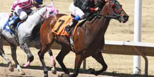 Arapahoe Park-Based Horse is an Equine Version of Bo Jackson