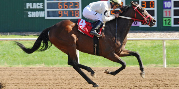 Hailstorm Slew Takes Great Lady M. Stakes at Will Rogers