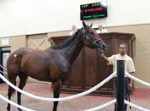 Hip 234, stakes winner Afternoon Tango, sold for $100,000 as the highest price at the sale. Photo by Muse Marketing Group