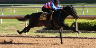 Redding Colliery Colt Posts Fastest Time in Rescheduled Texas Juvenile Under Tack Show