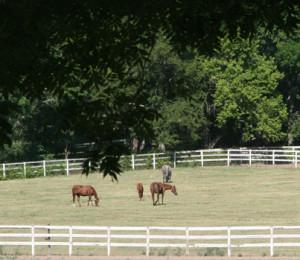 horsesinfield