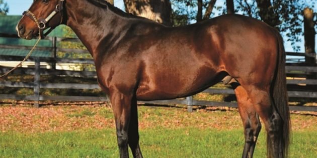 Stallion Hunt Crossing Relocated to Indiana Stallion Station