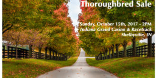 Catalog Now Online for ITOBA Fall Sale
