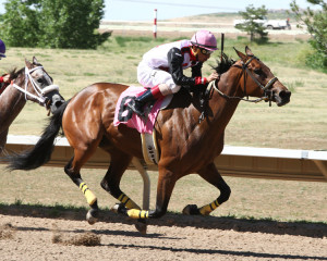 A grown up Last Dragoness winning the CTBA Lassie Stakes at Arapahoe Park. (Photo by Coady Photography)