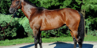 Grade 1-Winning Millionaire Majestic Harbor to Retire and Stand in Indiana at Swifty Farms