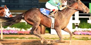 Indiana-bred Mister Pollard, by Oklahoma stallion Pollard's Vision, Goes Over $500,000 Earnings Mark
