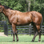 Texas Stallion Mr. Besilu Gets First Winner at Canterbury Park