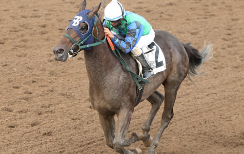 Pensador, Blazing Angel Win Minnesota Derby and Oaks, Fridaynitestar Takes MTA Futurity