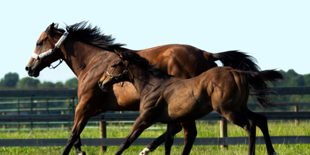 First Runhappy Foals in Indiana Bring Sire Full Circle