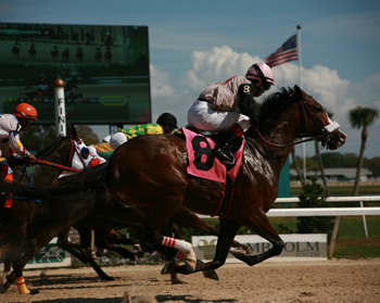 Easy Tips for Betting on Horse Racing