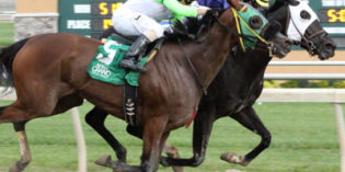 She Mabee Wild Upsets Richmond Stakes at Indiana Grand
