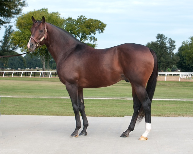 Fusaichi Pegasus Stallion Shermanesque To Stand In Texas