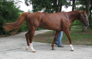 Alabama stallion Sky Hollister