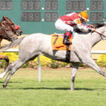 Strong Contender Gets First Indiana-Sired Winner