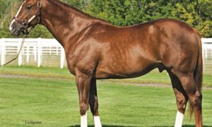 Giant's Causeway Stallion Stonerside Relocated to Valor Farm in Texas
