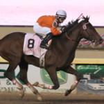 Major Stakes Winner Texas Bling Retired to Stud in Texas