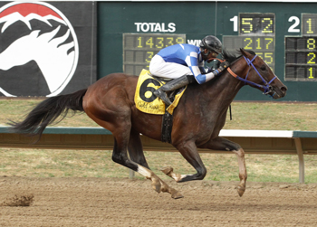 Texas Chrome Carries Hopes of Colorado, Texas and Oklahoma to the Breeders' Cup