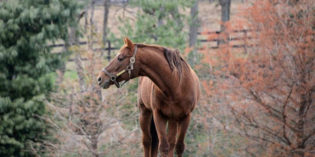 Tinners Way, Last Son of Secretariat and Former Texas Stallion, Dies at Age 27