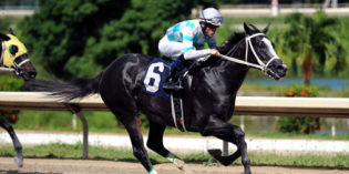Daughter of Too Much Bling, Too Much Tip, Favored in Grade 1 Race in Puerto Rico