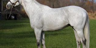 Ohio Stallion Twinspired Sires First Winner