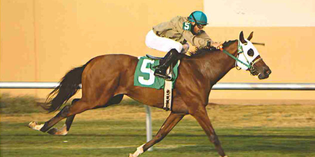 Texas Stallion Unbridled Sheriff Gets First Winner at Lone Star Park