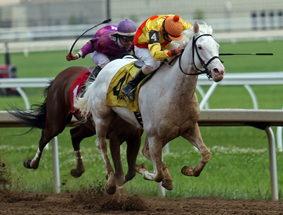 Rare White Thoroughbred Wins at Belterra Park