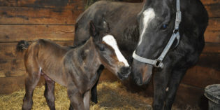 First Minnesota-bred by Triple Crown Winner American Pharoah Foaled at Wood-Mere Farm