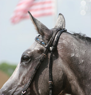 The Best American Racehorses Of All Time