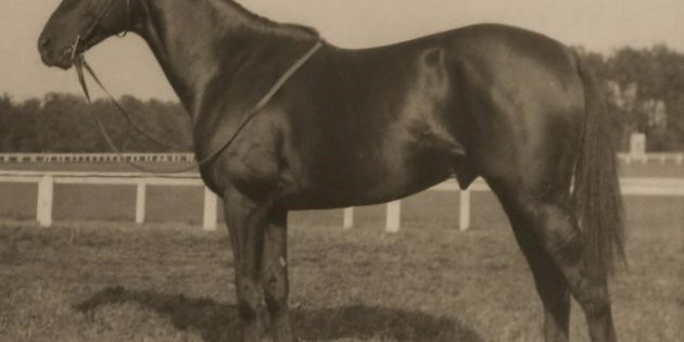 "Battleship – the ""American Pony"" who triumphed at Aintree"